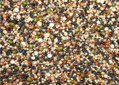 Bamfords Soak Seed 12.5kg